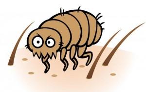 flea-_akiradesigns_large