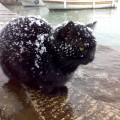 fleas-in-winter