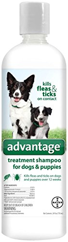 Can You Use Cat Dry Flea Shampoo On Dogs