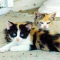 1280px-Kittens_(1)